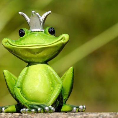 frog-2240764_1280